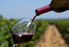 In calo l'export del vino italiano: preoccupazioni e speranze per i DOP tutelati