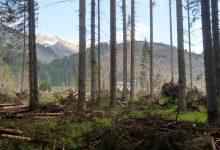 I patrimoni liquidi e forestali per uno sviluppo più sostenibile