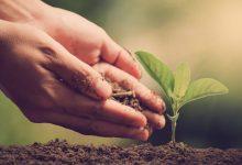 La strategia Farm to Fork per la sostenibilità dell'agricoltura europea e mediterranea
