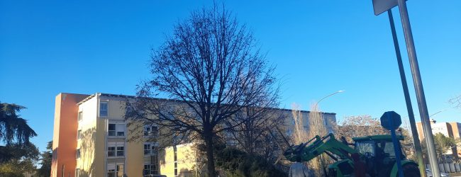 Benevento: domani l'accensione dell'Albero di Natale del Ricordo e della Rinascita