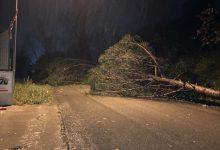 Maltempo, nel Sannio alberi a terra per il forte vento  [FOTO]