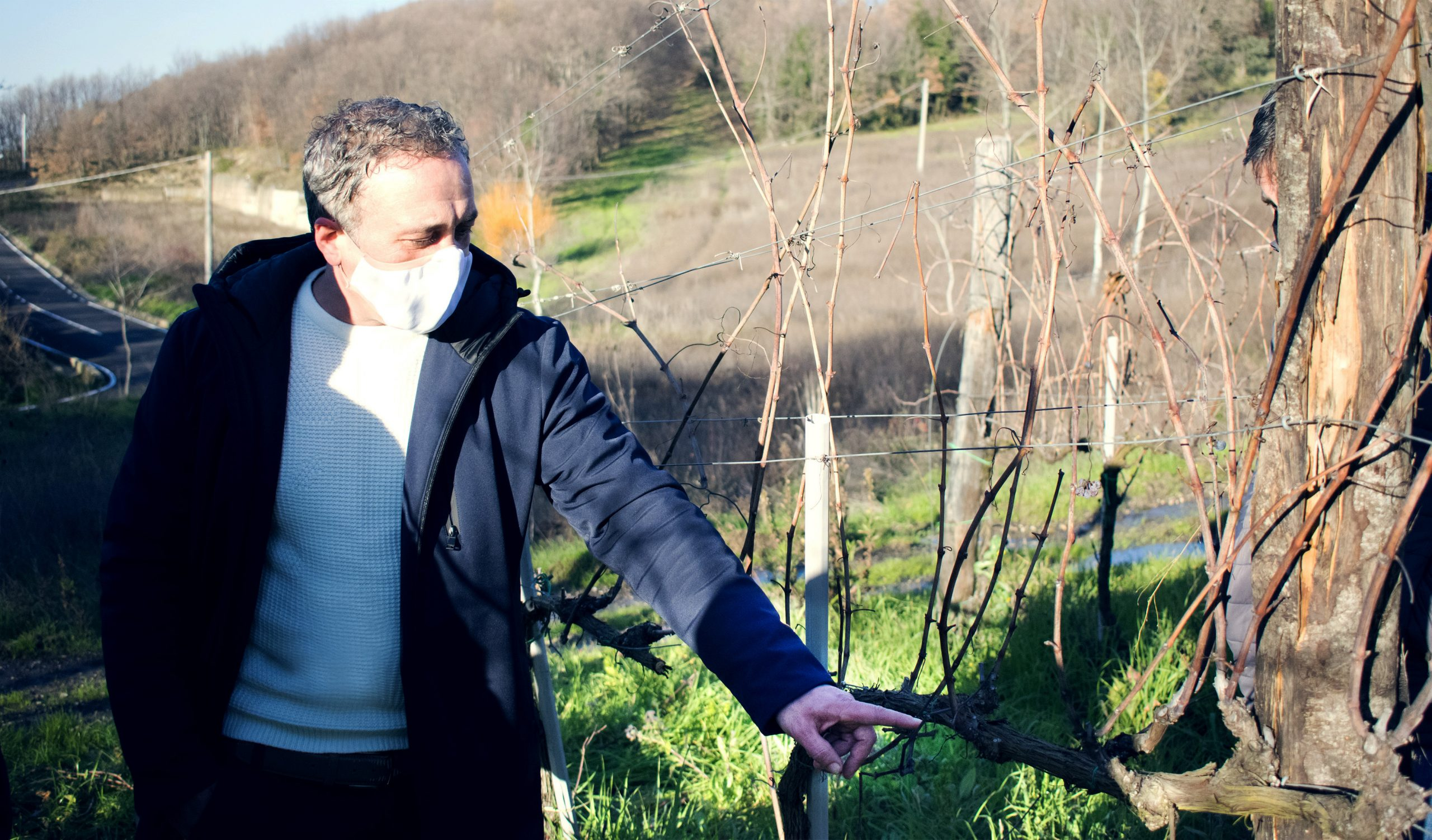 Irpinia| Via libera ai corsi di potatura anticovid, Di Marzo: investire sulla qualità dei vini la risposta ai prezzi al ribasso