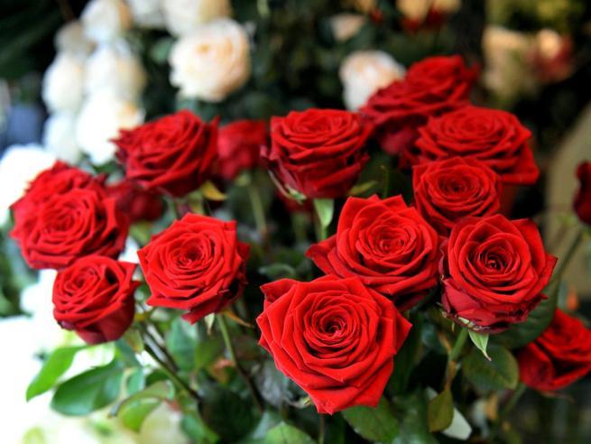 San Valentino, l'appello di Coldiretti: comprate fiori per salvare 20 mila lavoratori