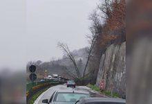 Serino| Maltempo a Serino, alberi sulla carreggiata del raccordo autostradale: traffico bloccato