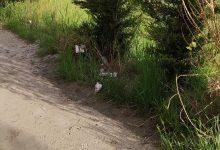Giglio(Benevento Centrale): lungocalore bomba ecologica/FOTO