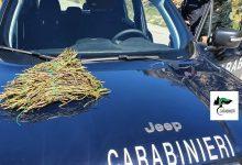 Campagna di controlli per la prevenzione degli incendi boschivi: Carabinieri Forestali della Regione sequestrano 87 kg di asparago selvatico