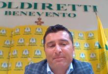 """Vaccini nelle cantine sannite, Dell'Orto (Coldiretti BN): """"Cosi rilanciamo il settore"""""""