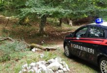 Montevergine  Taglio e furto di legna nell'area protetta di Campo Maggiore, nei guai 2 uomini