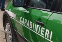 Controlli da parte dei carabinieri del gruppo forestale di Avellino