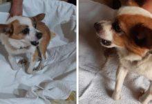 Lega del cane San Giorgio del Sannio: SOS raccolta fondi, aiutiamo Ninì