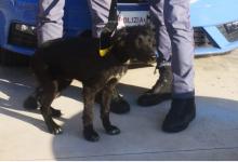 Cucciolo abbandonato in strada, salvato dalla polizia