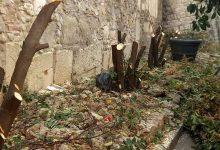 Benevento/La denuncia social di Civico 22: taglio brutale di siepi in via Traiano. Con quale criterio sono stati tagliati questi alberi?
