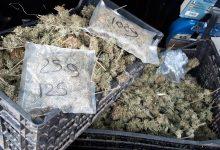 Avellino| Percettore del reddito di cittadinanza arrotondava coltivando marijuana: 50enne ai domiciliari, sequestrati 3,7 kg di droga