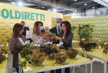 Vinitaly, Coldiretti: le uve storiche campane tra i grappoli d'Italia